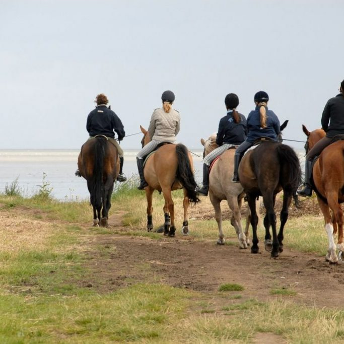 Horse-Group